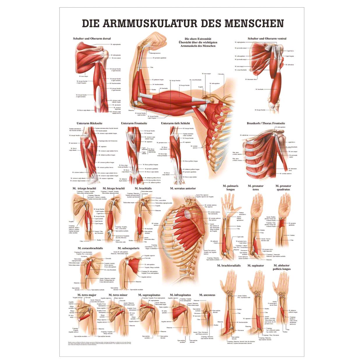 Groß Anatomie Für Anfänger Video Fotos - Anatomie Ideen - finotti.info