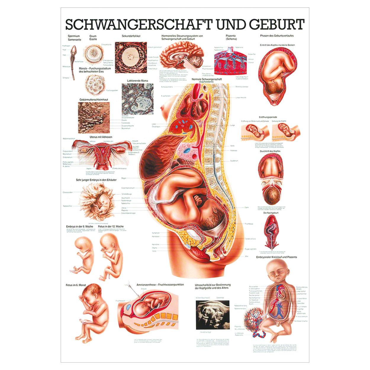 Dokumentation Schwangerschaft Und Geburt
